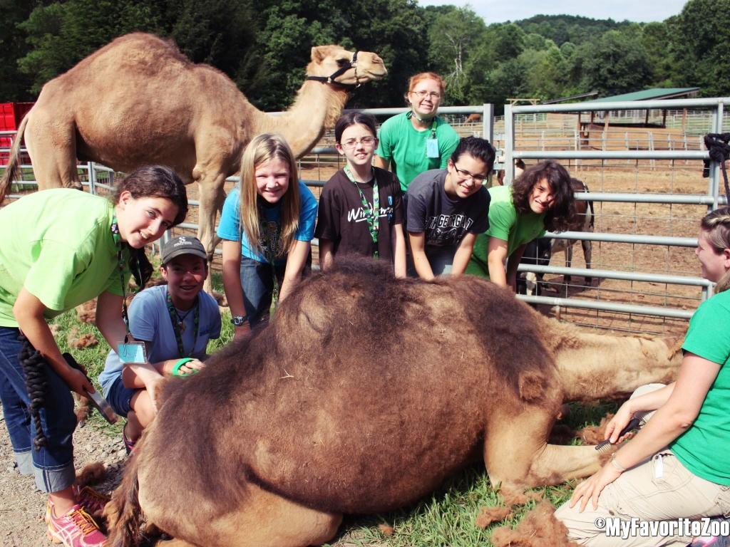Camel-Encounter-Overnight-Teen-Camp-2015-9