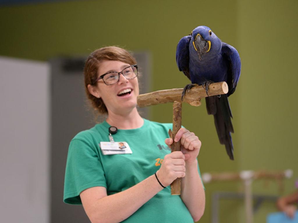 educator-macaw-gallery-web