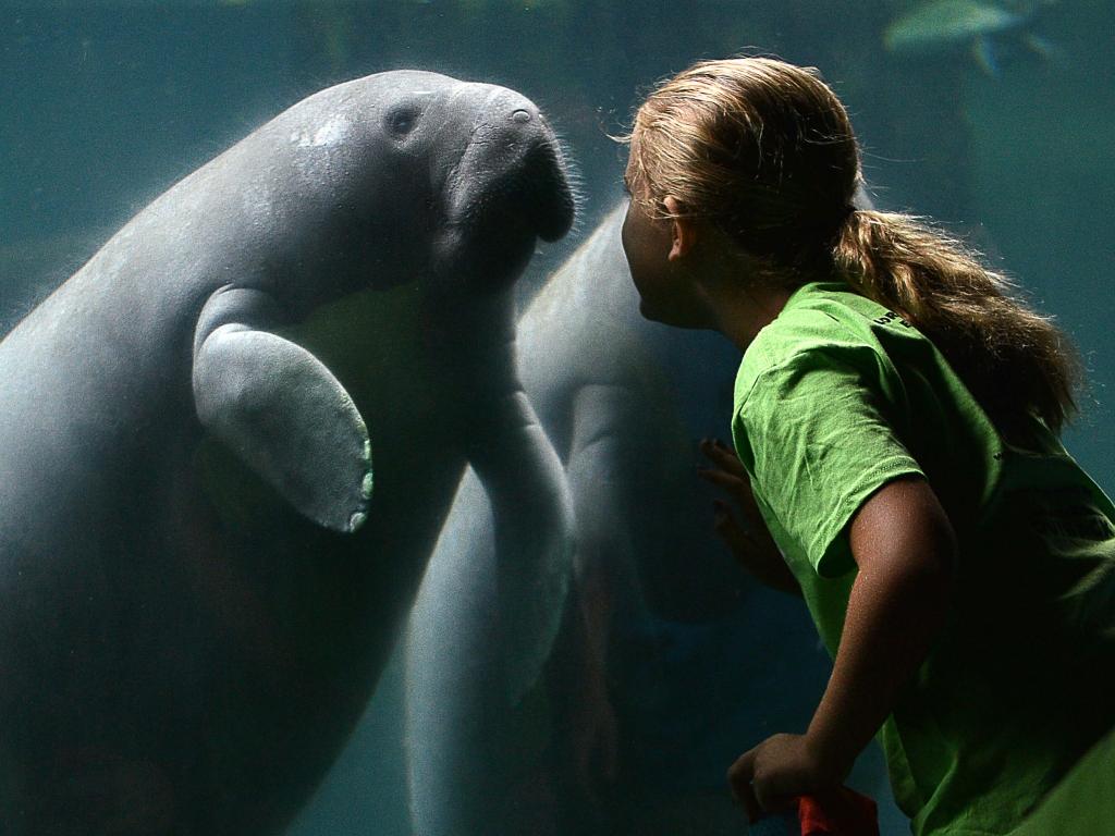 florida-boardwalk-manatee-and-zoo-school-student-aug-14-2014