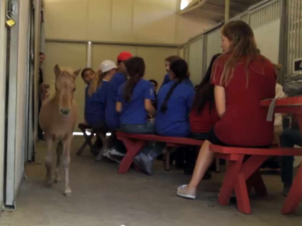 foal-horse-camp