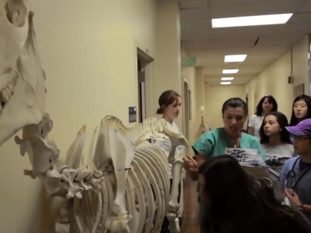 horse-skeleton-vet-camp