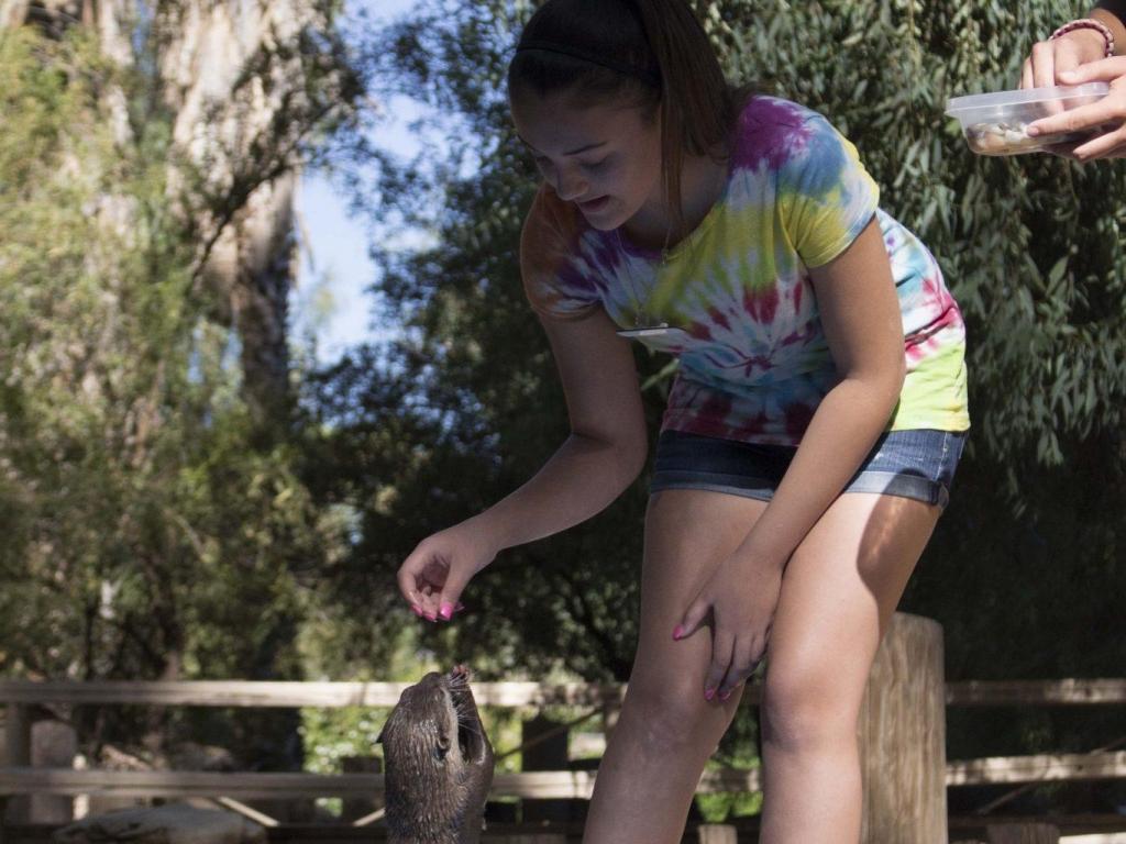 Otter Training