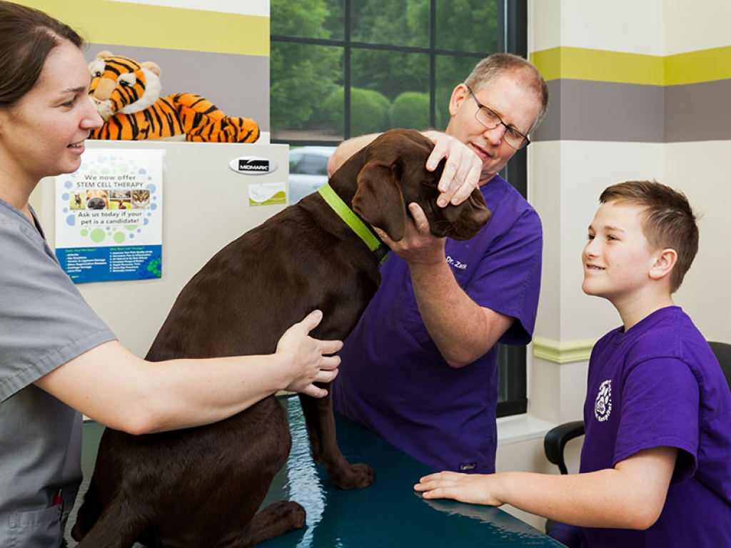 veterinarian-camper-oral-exam-web