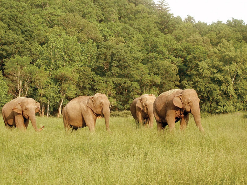 Elephants-field-gallery-web