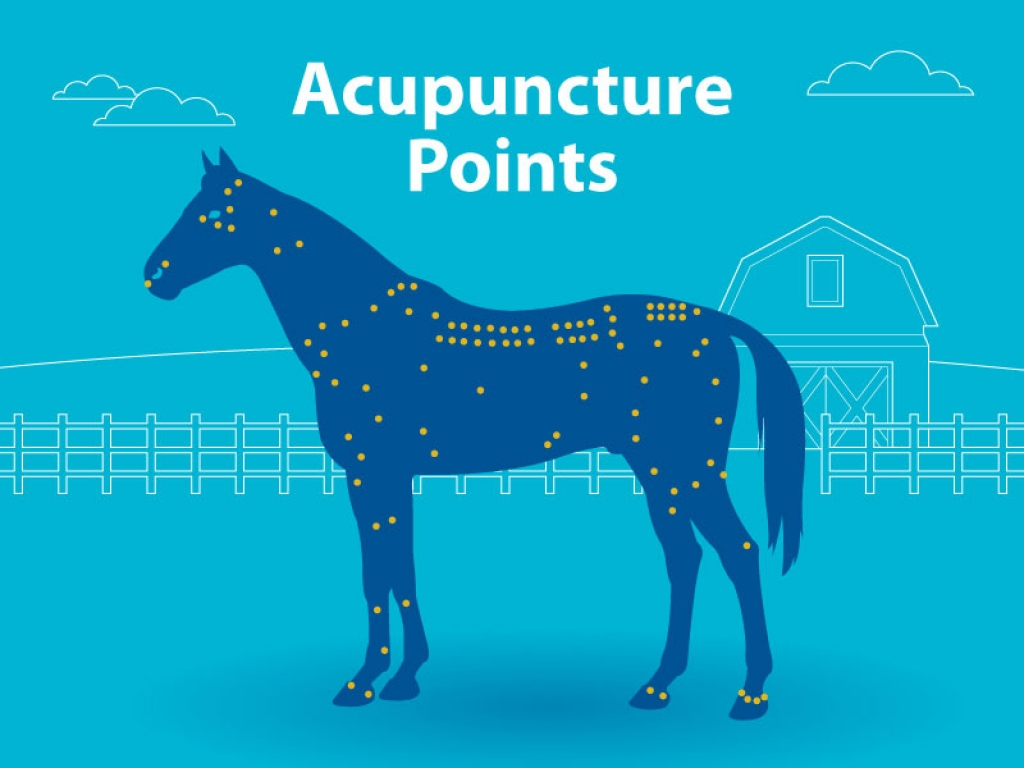 Horse-Accupuncture-Points