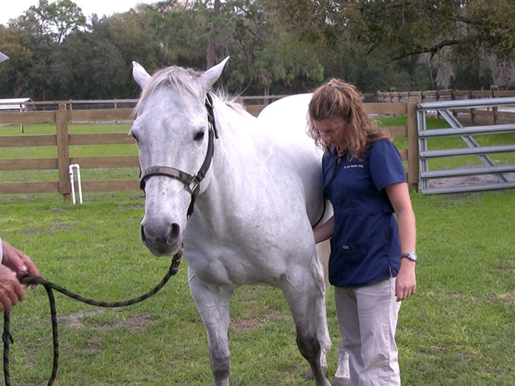 Horse-Auscultation-gallery-web