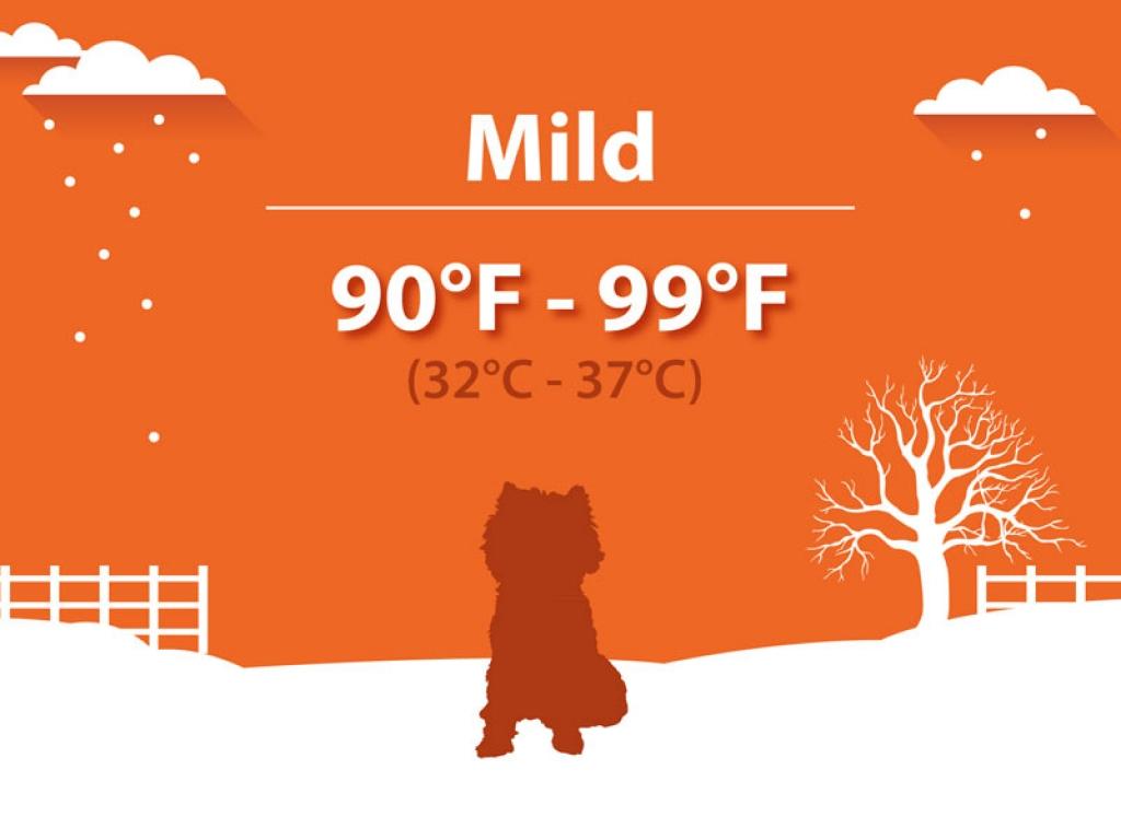 Mild Hypothermia Dogs