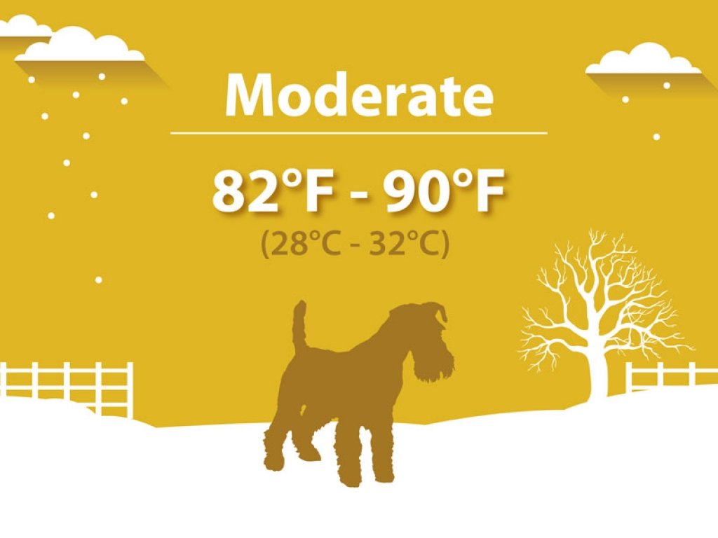 Moderate Hypothermia Dogs