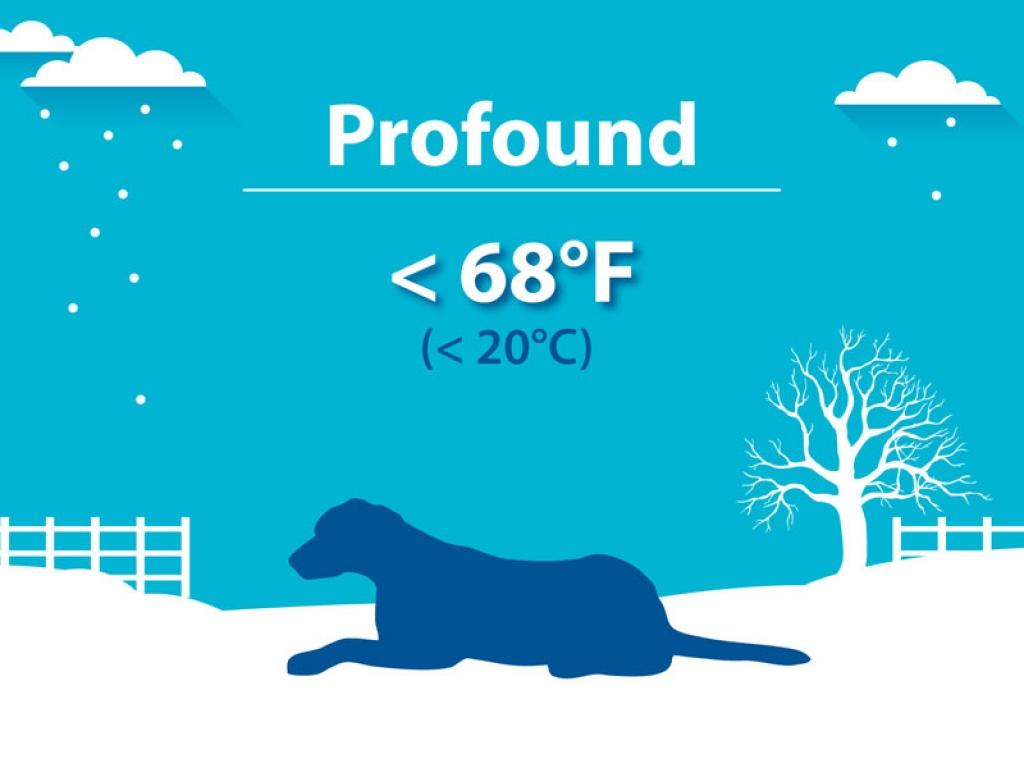 Profound Hypothermia Dog