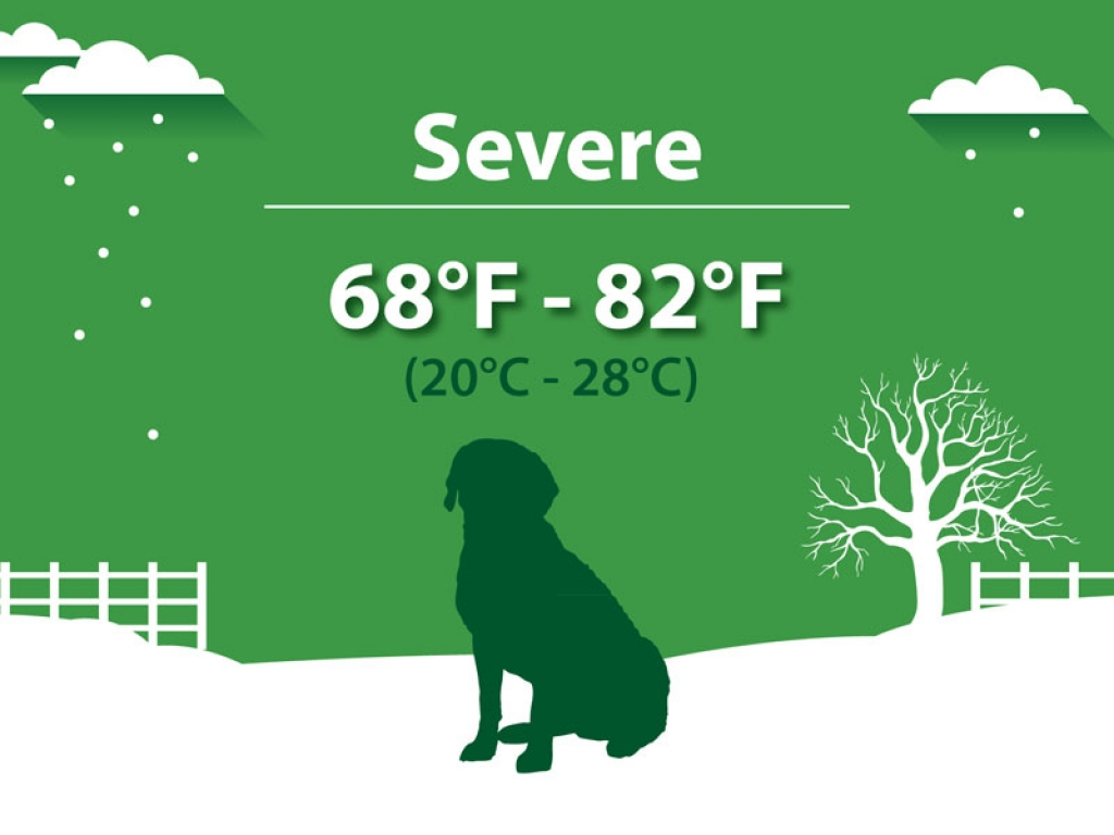 Severe Hypothermia Dogs