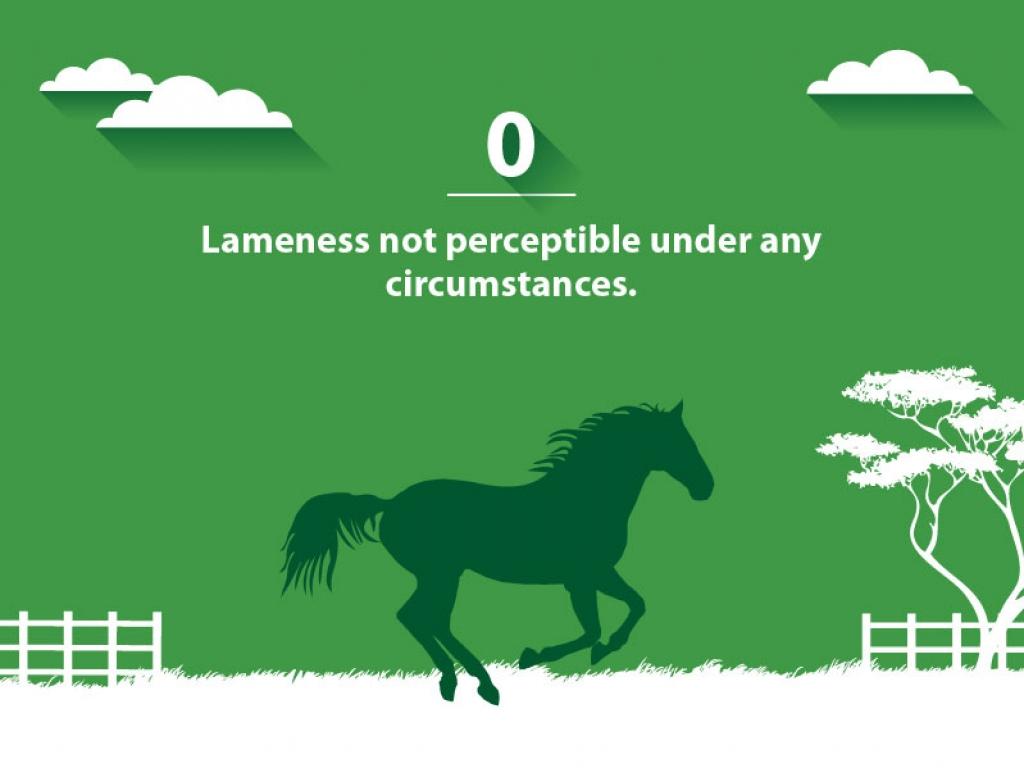 VSG lameness-scale 0-web