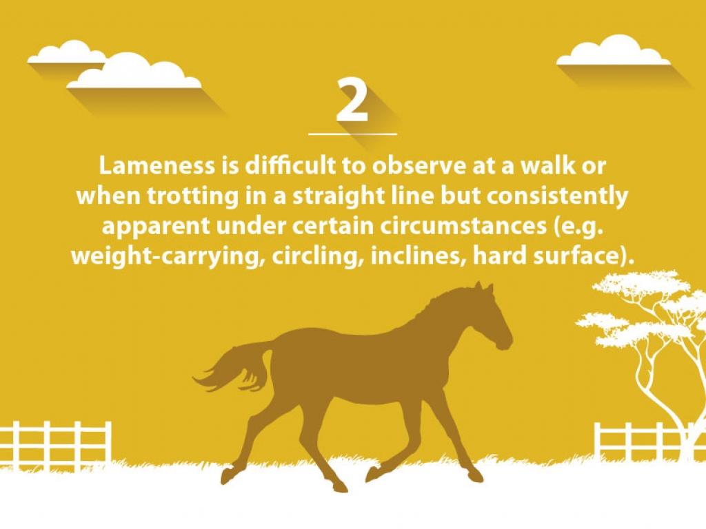 VSG lameness-scale 2-web