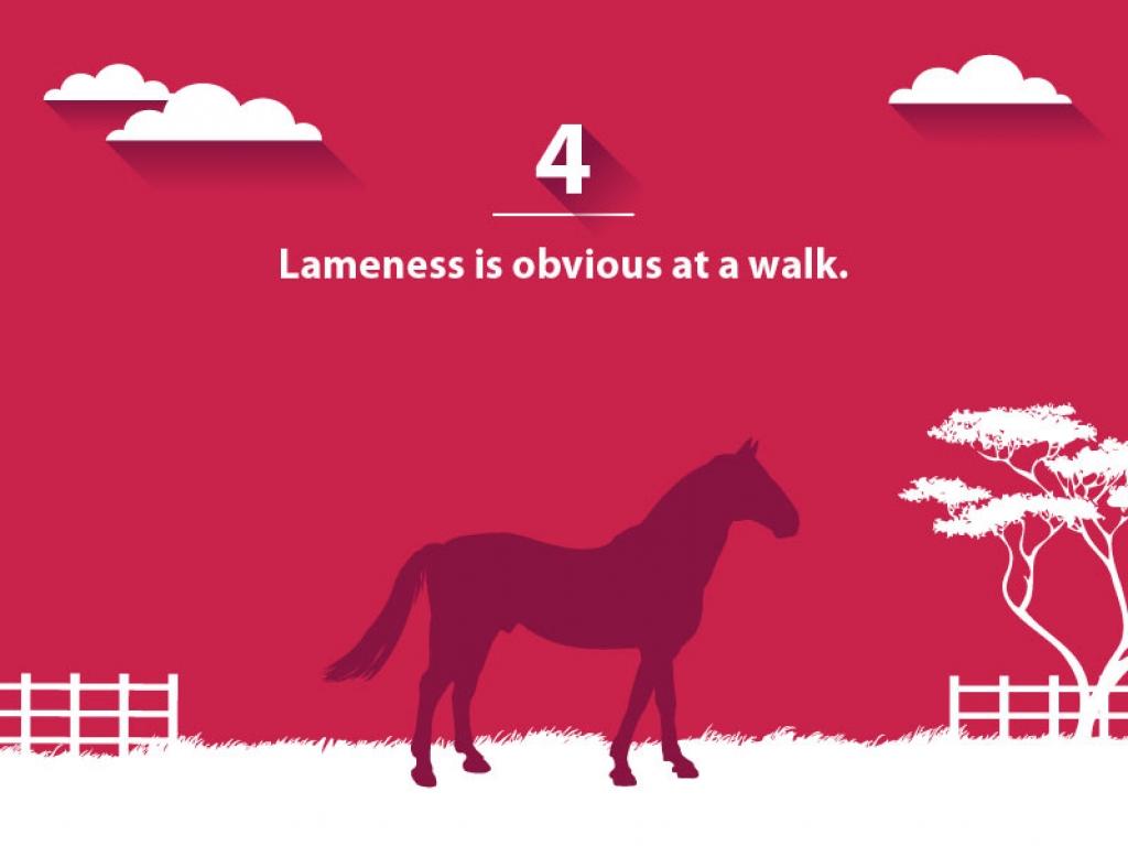 VSG lameness-scale 4-web