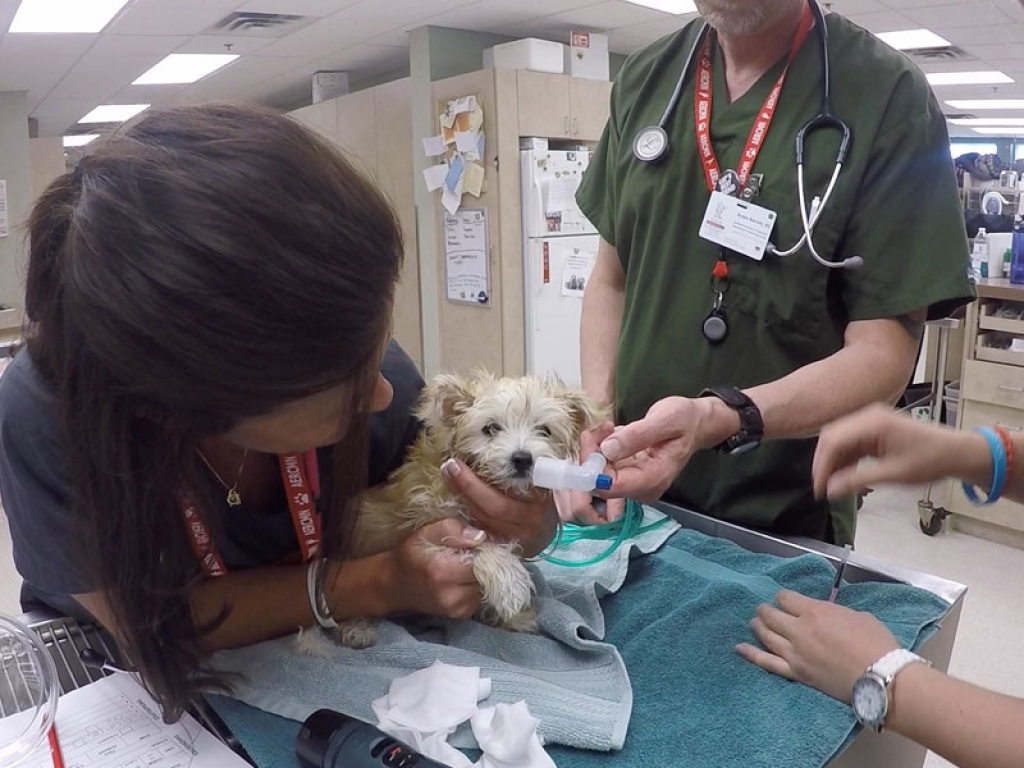 Vet Tech Caring For Puppy