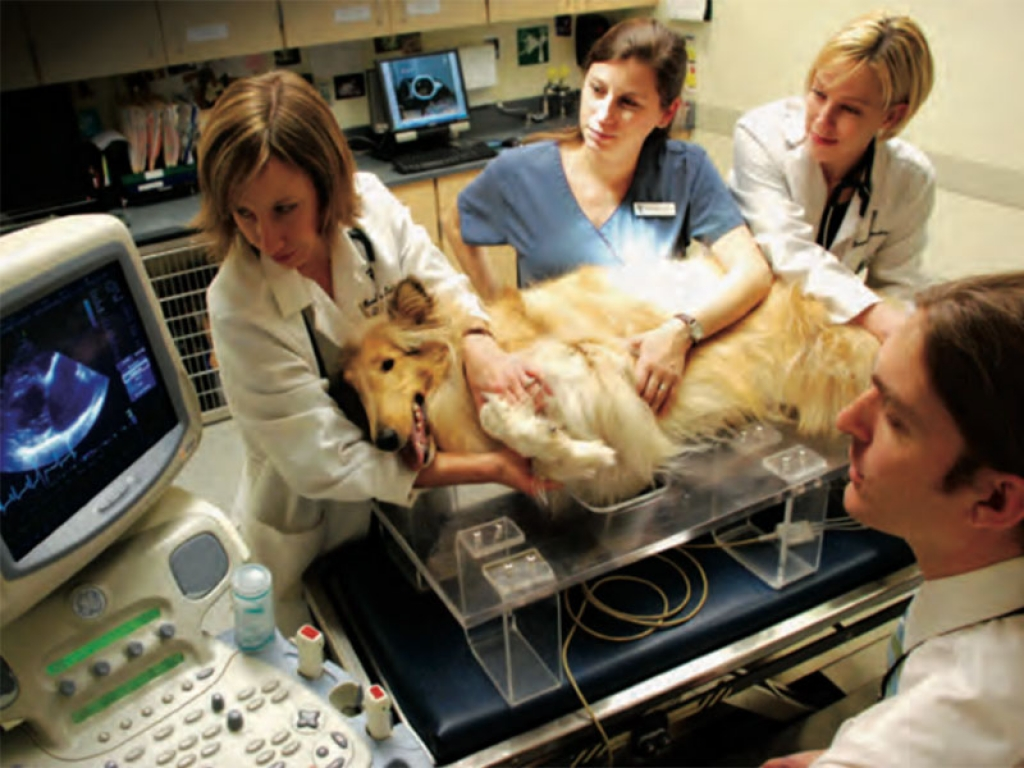 Veterinary-team-ultrasound-gallery