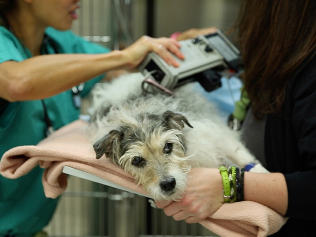 Emergency Vet Clinic Patient