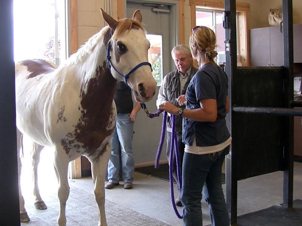 equine-veterinarian-horse-gallery-web