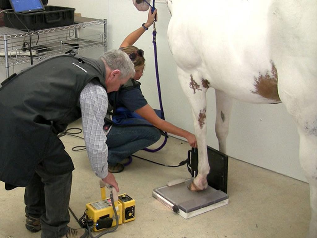 horse-radiograph-gallery-web