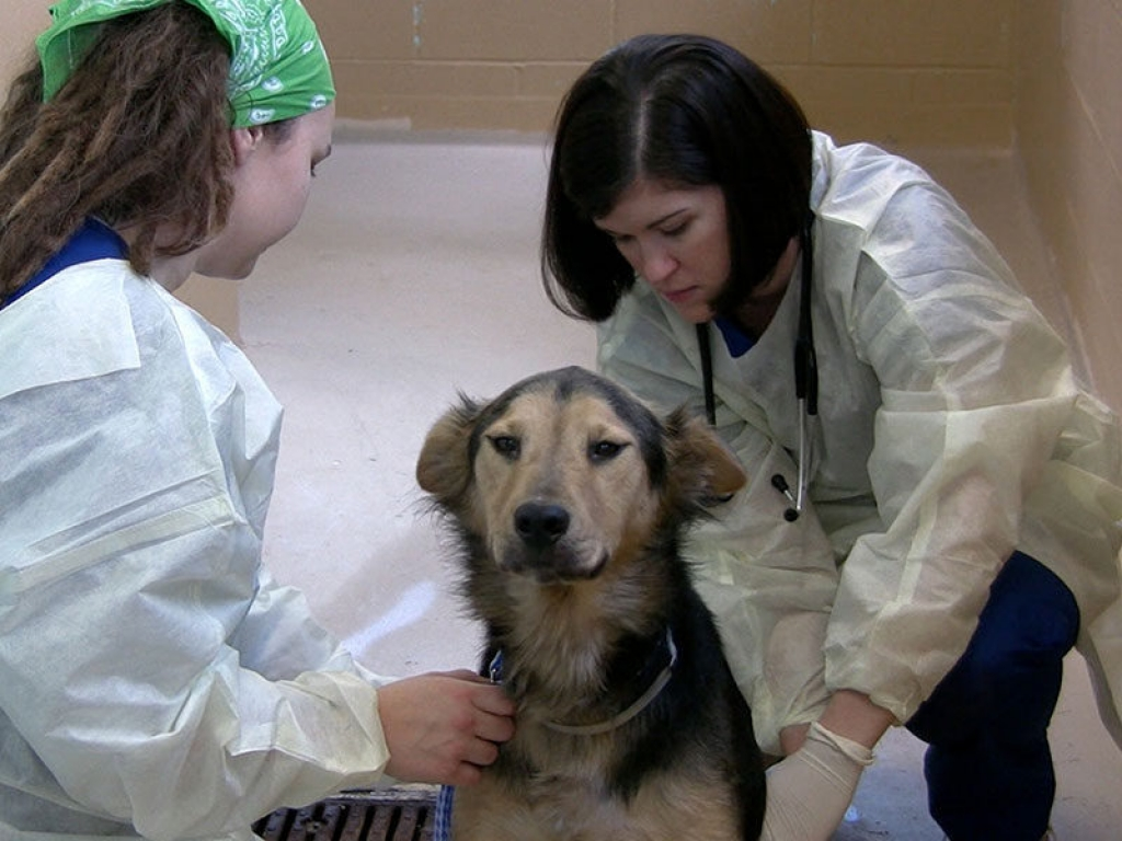 shelter-vet-kennel-exam-gallery-web