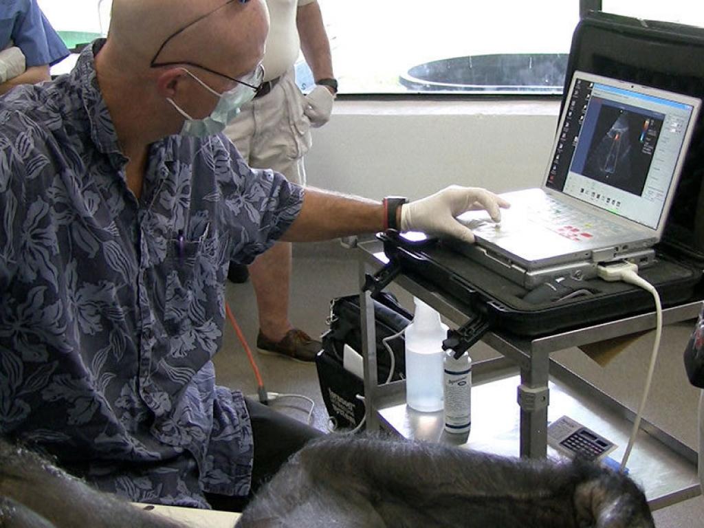 veterinarian-close-electrocardiogram-gallery-web