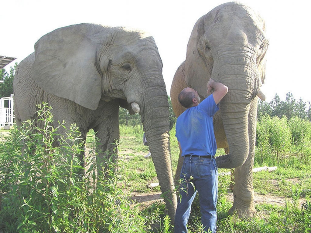 veterinarian-elephant-exam-gallery-web