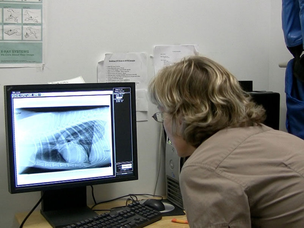 veterinarian-radiograph-wolf-gallery-web