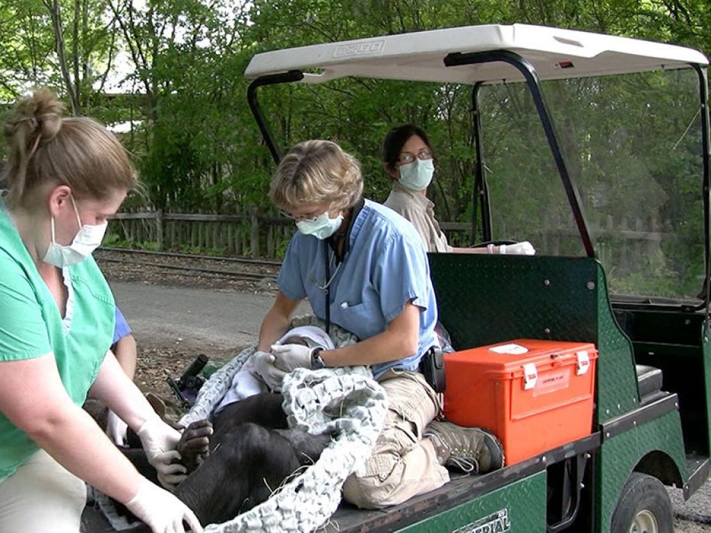 veterinarians-trasport-bonobo-gallery-web