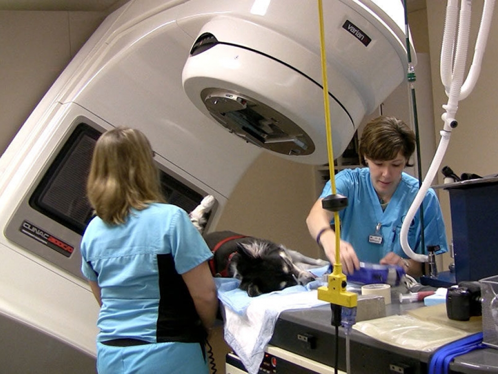 veterinary-radiation-therapy-gallery-web