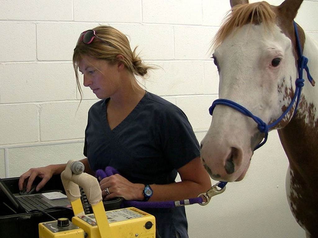 veterinary-tech-horse-galleryi-web