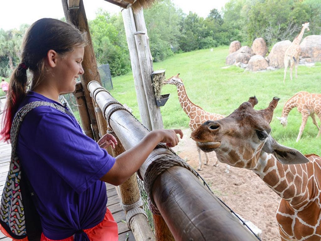 zoo-camper-giraffe-galery-web