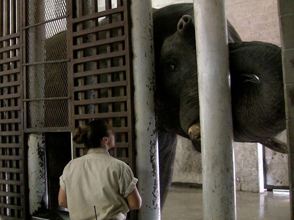 zoo-elephant-gallery-web