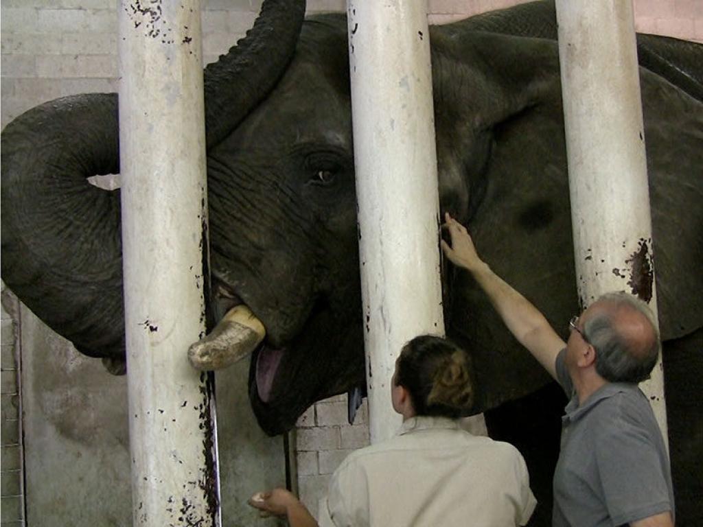 zoo-veterinarian-elephant-gallery-web