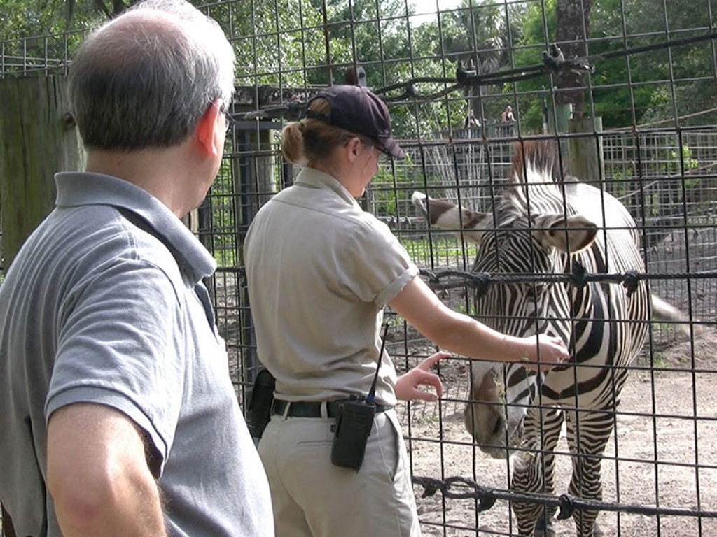 zoo-veterinarian-zebra-gallery-web