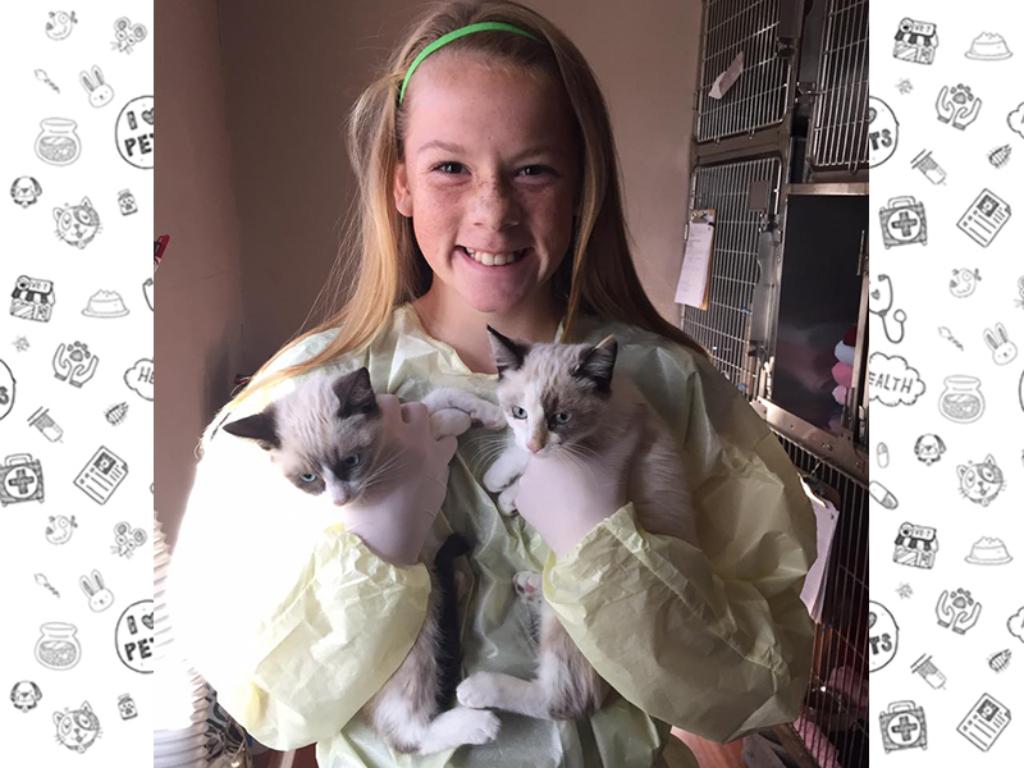 Volunteer Kittens