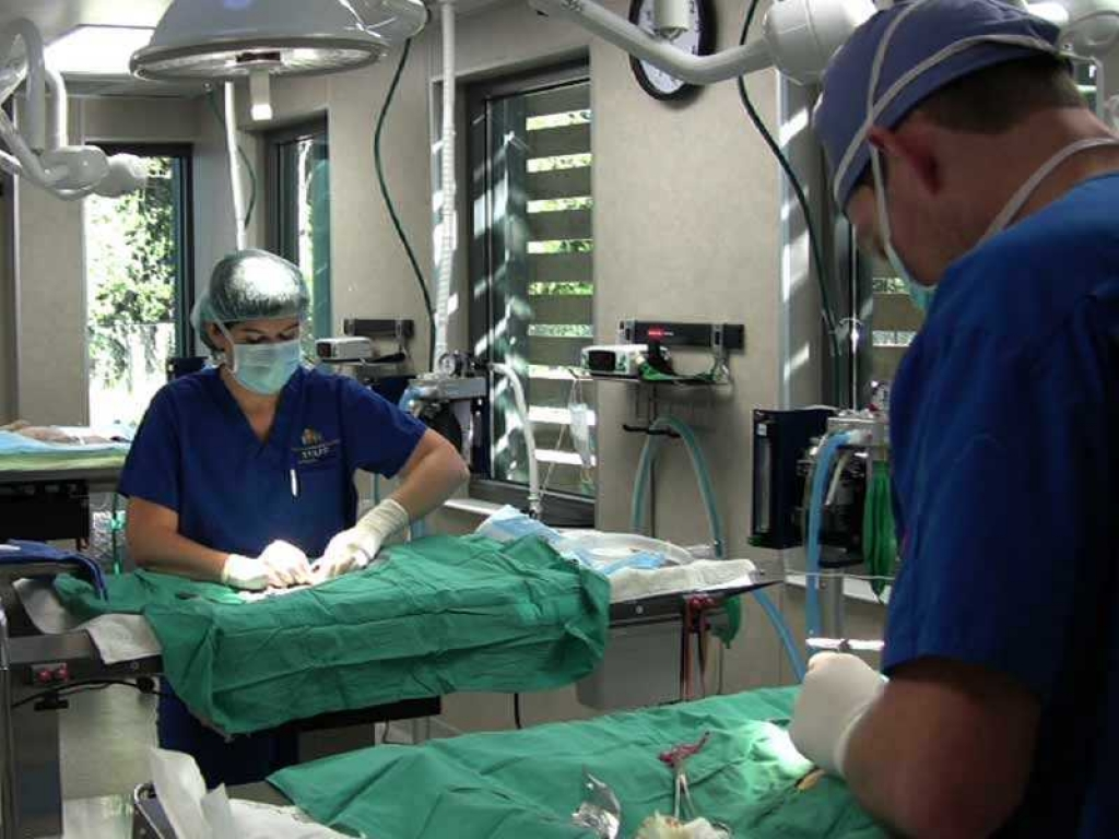veterinarians-surgery-web